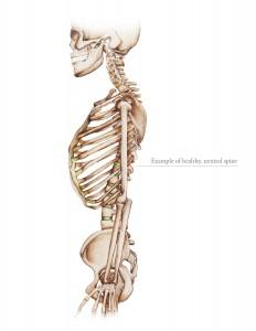 Neutral_Spine