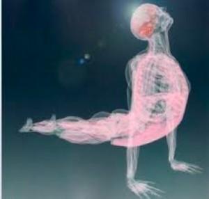 fascia-whole-body